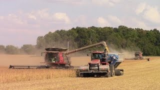 two case ih 9240 combines harvesting soybeans