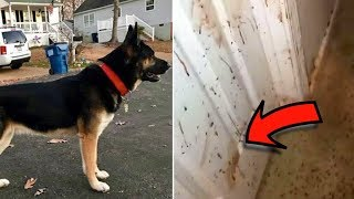 They Thought Their Dog Was Hurt When They Got Home And Saw Blood All Over But They Were Wrong