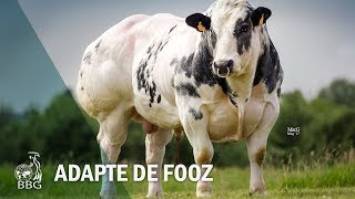 ADAPTE DE FOOZ - Portes ouvertes BBG 2017