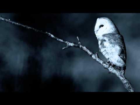 8 horas de Sons da Natureza: Noite calma num bosque (chuva, coruja, grilos)