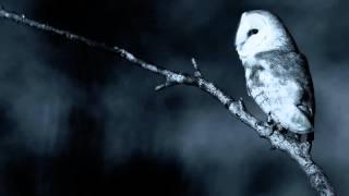 8 horas de Sons da Natureza - Noite calma num bosque (chuva, coruja, grilos)