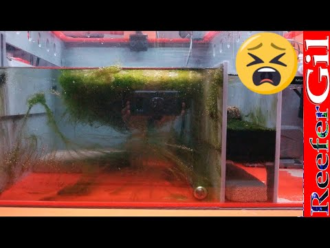 How To Beat Green Hair Algae: Saltwater Aquarium