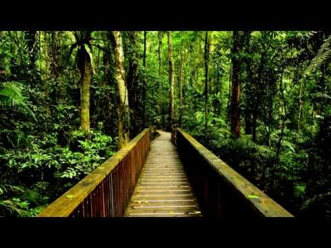 The Sound of The Rainforest