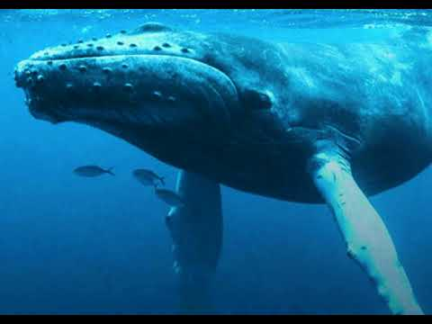 Earthcast SOS - Belize Protects the Whales