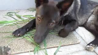Почему собака ест траву