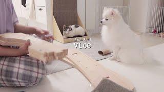 [ENG Vlog] 고양이/강아지 놀아주고 대청소 하다…