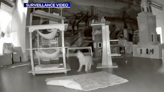 Oakland Cat Burglary – with Real Cats – Caught on Camera