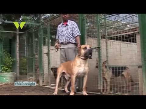 Business Foresight: Dog Breeding