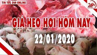 Giá heo hơi ngày hôm nay 22/1/2020 | Giá lợn hơi giảm nhẹ | Tin tức 24h | TT24h
