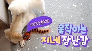 움직이는 지네 장난감을 본 강아지의 반응은? 🐕