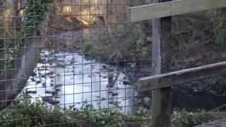 pets corner vlog - Abbey