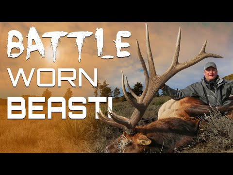 MONSTER ELK Rifle HUNTING Late Season Montana Elk Hunting