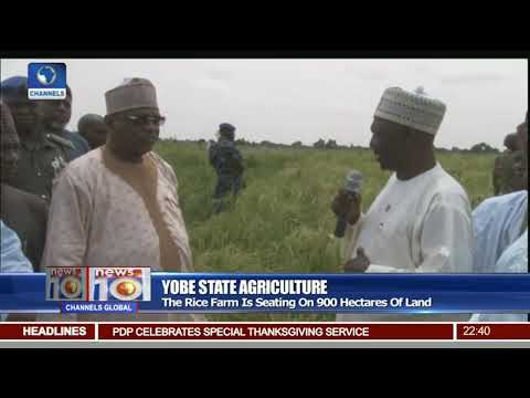 Yobe Govt Embarks On Irrigation Plans To Boost Production Of Grains