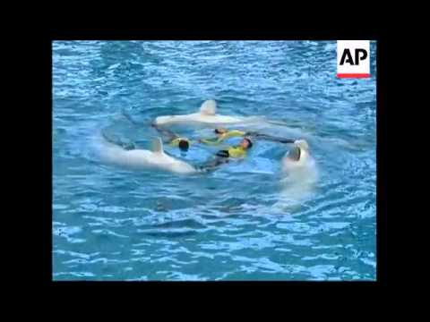 Synchronised swimming by dolphins