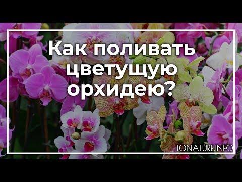 Как поливать орхидею в домашних условиях при цветении