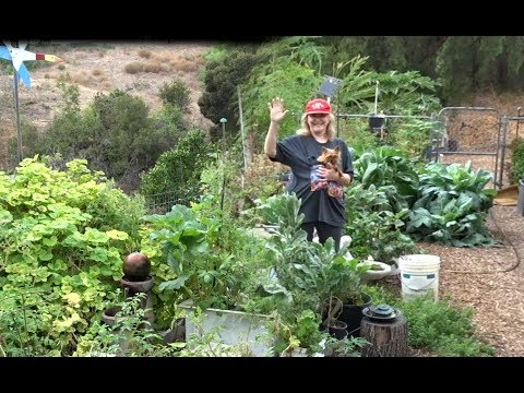 Food Vegetable Garden Working Discussing Composting Growing Food