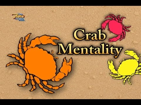 crab mentality Do you want to live your dream life then beware the crab mentality people may try to.