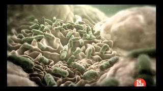 Фильм про бактерии  часть 2