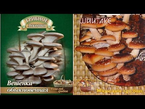 надомное выращивание грибов шиитами