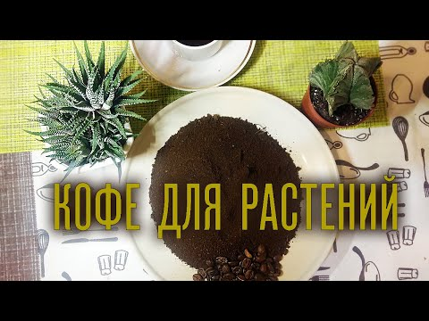 Кофейная гуща как удобрение. Угощаю растения кофе