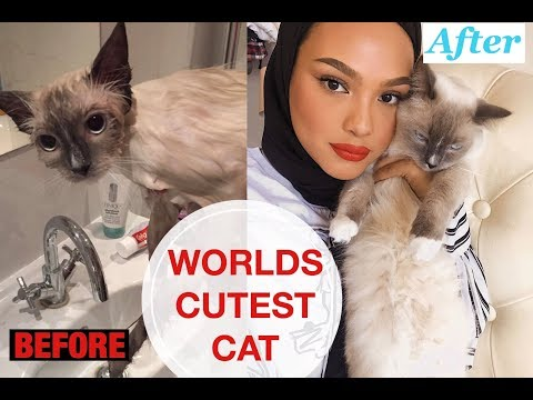 HOW I BATHE MY CAT | *WARNING* Cuteness overload!!