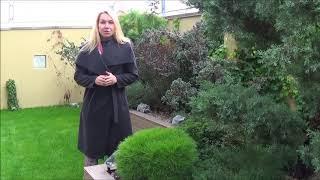 видео Особенности создания и ухода за декоративными газонами