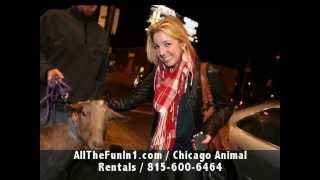 Call 815-600-6464-Animal Rental,Animal Rentals,Animal Rental Chicago,Animal Rentals Chicago Area