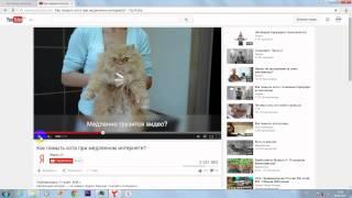 Как помыть кота.[Яндекс браузер]1.mp4