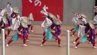 さのよいファイヤーカーニバル2013 ふくこい踊り隊