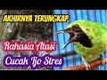 Masteran Terbaik Cucak Ijo Gacor Dengan Diiringi Suara Gemericik Air  Mp3 - Mp4 Download