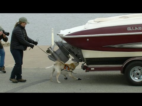 Dogs Sniff Out Invasive Zebra Mussels - Texas Parks and Wildlife [Official]