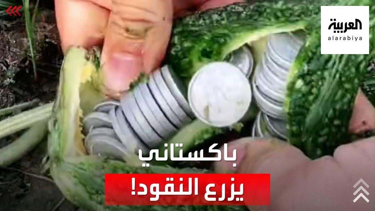 باكستاني يكسب ملايين المشاهدات بحيلة -زراعة النقود- وجني ثمارها  - نشر قبل 8 ساعة