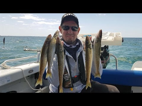 How To Catch Whiting Fishing Port Phillip Bay