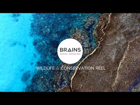 BRAINS Conservation Reel