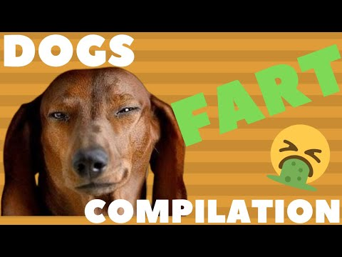 Funniest Dogs Farting  Dogs Farting Compilation