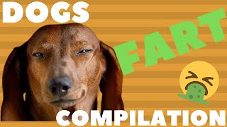 Funniest Dogs Farting 🐕💨 Dogs Farting Compilation