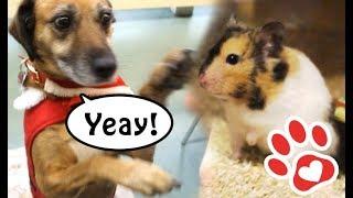 Hund in der Uni 🐶 Eingebildeter Hamster 🐹 ♥ Mini Vlog