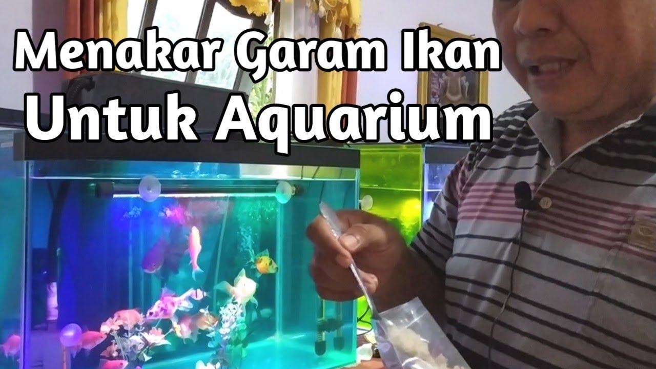 Cara Tepat Menakar Garam Ikan Untuk Aquarium Youtube