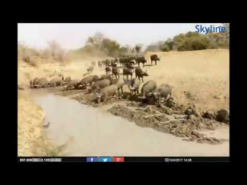 LIVE cam: South Luangwa, Zambia