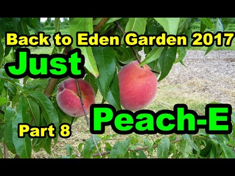Back to Eden Gardening with Wood Chips for No till Organic beginners 101.  Pt 8