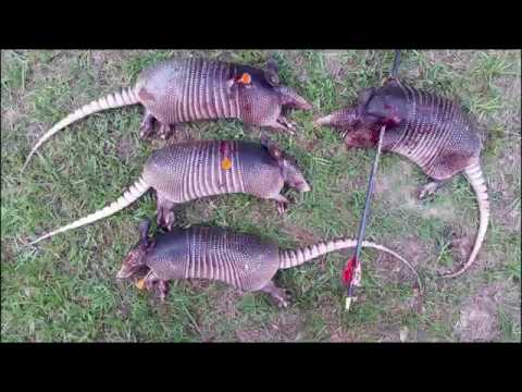 Armadillo Hunting With A Blowgun