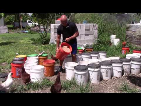 Fermented grains for chickens feed experience