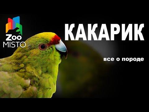 Вопрос: Кеа попугай .Чем знаменита порода?