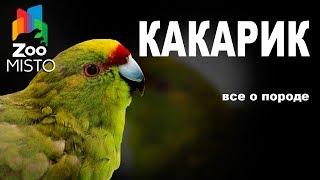 Какарик - Все о породе попугаев | Попугай породы - Какарик