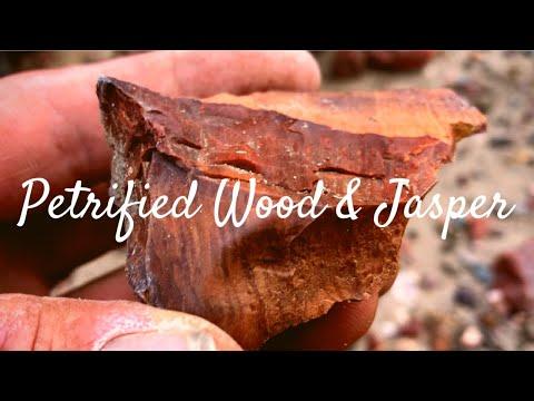 Finding Petrified Wood & Jasper • I'm A Rockhounding Rookie Again...