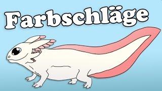Farbvarianten beim Axolotl