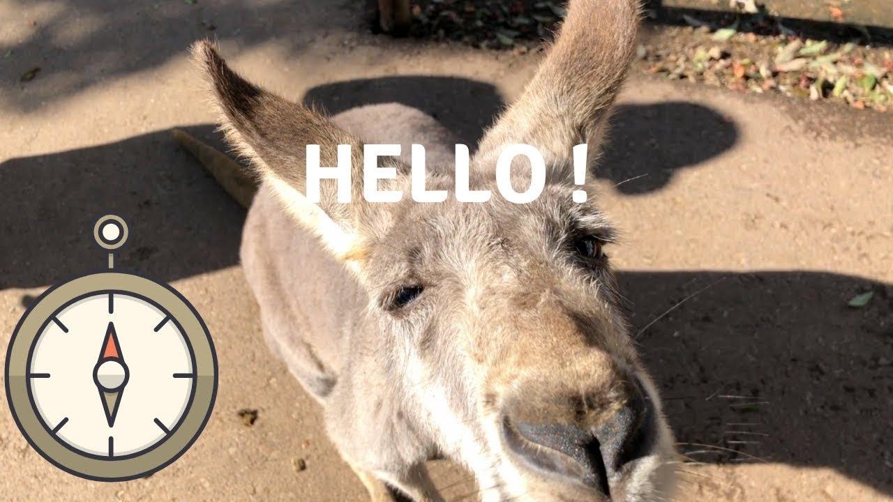 Why is this Kangaroo so cute?!