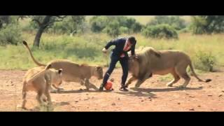 Футбол со львами   Football with lions
