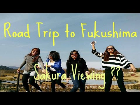 Road Trip to Fukushima : Sakura Viewing??