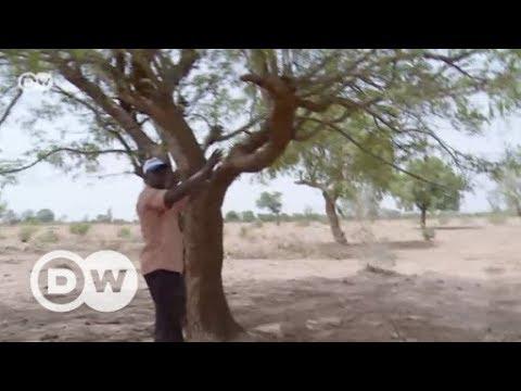 Kampf um Wasser und Bäume in Mali   DW Deutsch